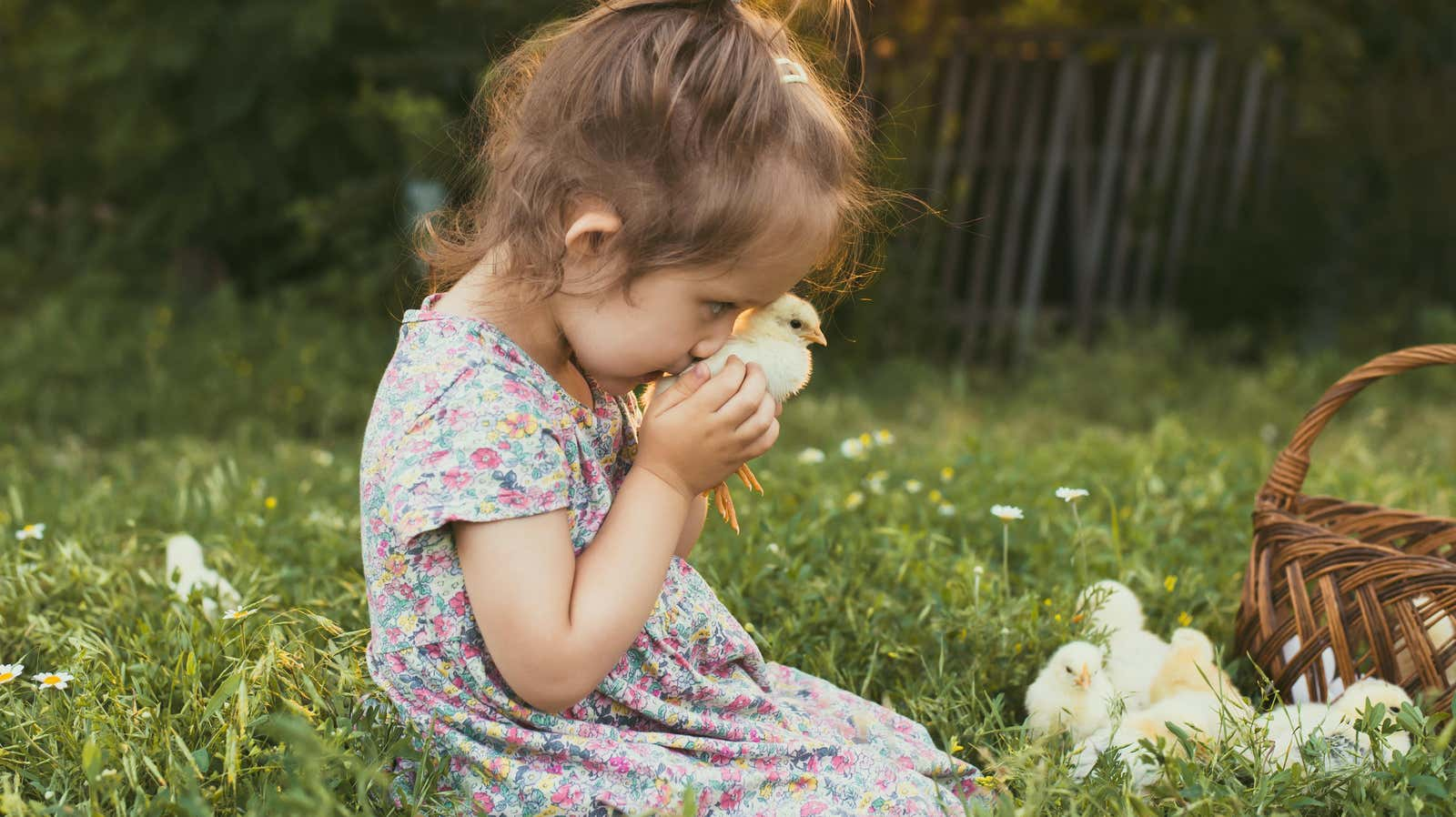 It's Your Mouth, But Please Stop Kissing Poultry, CDC Says
