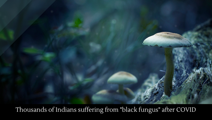 """Thousands of Indians suffering from """"black fungus"""" after COVID"""