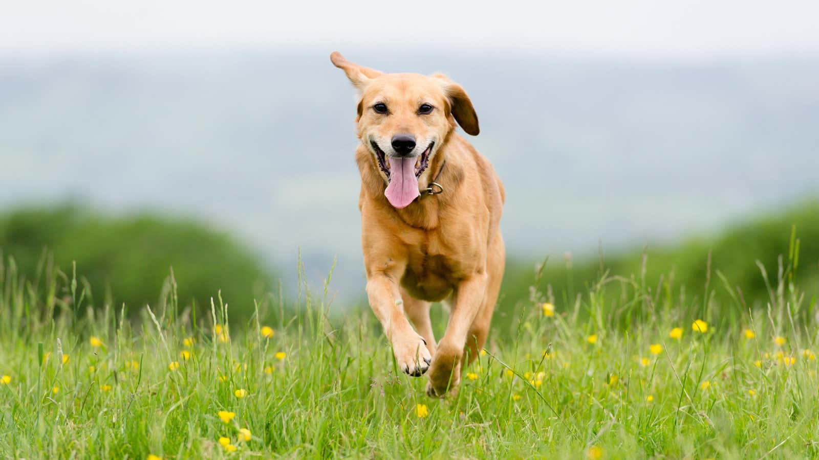 You Can Use GPS to Track Your Pet (Because a Microchip Won't)